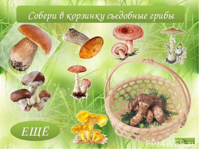 ЕЩЁ Собери в корзинку съедобные грибы