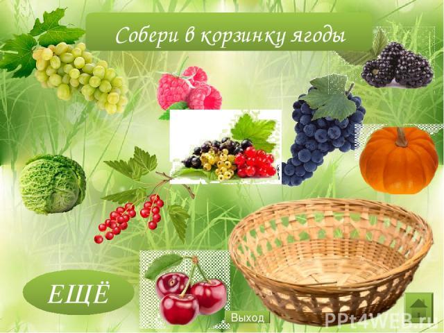 ЕЩЁ Собери в корзинку ягоды Выход