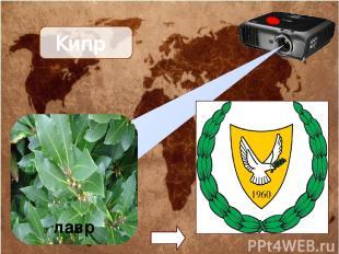 Кипр лавр