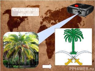 Саудовская Аравия финиковая пальма