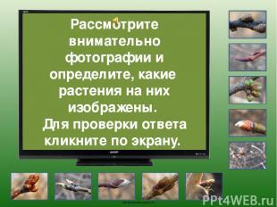 Груша oineverova.usoz.ru