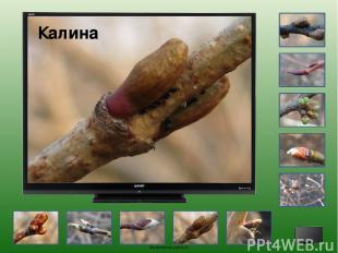 Слива oineverova.usoz.ru