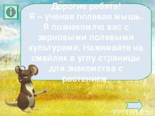 Дорогие ребята! Я – ученая полевая мышь. Я познакомлю вас с зерновыми полевыми к