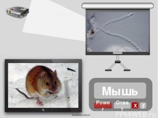 Кабан Power Х Ответ → oineverova.usoz.ru