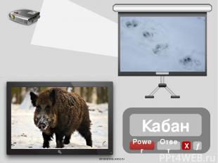 Косуля Power Ответ Х → oineverova.usoz.ru