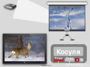 Источники Логотип Х Проектор Экран Экран Следы След лося Лось След зайца Заяц Сл