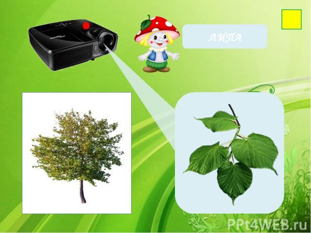 Фон-http://wallpaperscraft.ru/image/cached_65979_2048x1152.jpg Проектор- http://www.interlink.ru/image/Big/2012017.jpg Берёза- http://www.playcast.ru/uploads/2015/05/17/13633665.png Лист березы- http://cs5.pikabu.ru/images/big_size_comm/2015-02_1/14…