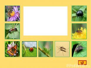 Щелкнув по маленькой картинке, вы вспомните названия насекомых выбранной картинк