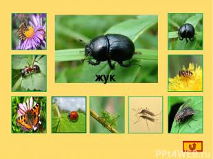 Интернет-ресурсы: Пчела Муравей Бабочка божья коровка Кузнечик Комар Жук Оса Мух