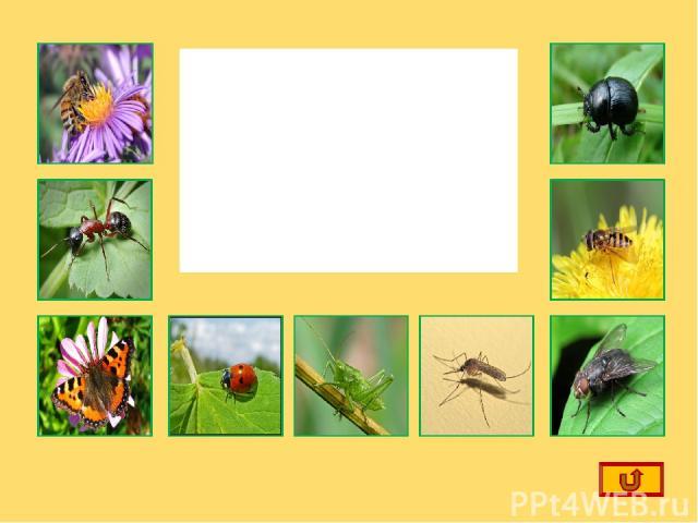 Щелкнув по маленькой картинке, вы вспомните названия насекомых выбранной картинке. Выход из презентации Ребята!