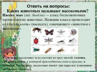 Ответь на вопросы: Каких животных называют насекомыми? Насеко мые (лат.Insécta)