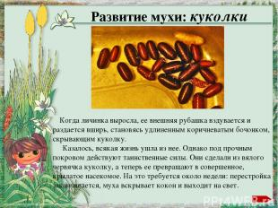 Автор шаблона Ранько Елена Алексеевна http://elenaranko.ucoz.ru/ Фон: сканирован