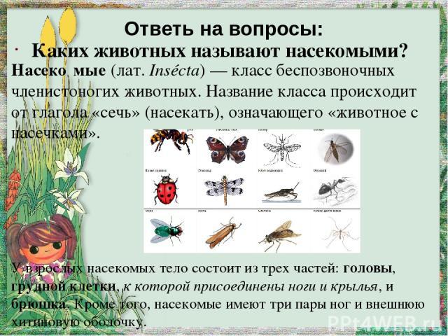 Ответь на вопросы: Каких животных называют насекомыми? Насеко мые (лат.Insécta)— класс беспозвоночных членистоногих животных. Название класса происходит от глагола «сечь» (насекать), означающего «животное с насечками». У взрослых насекомых тело со…
