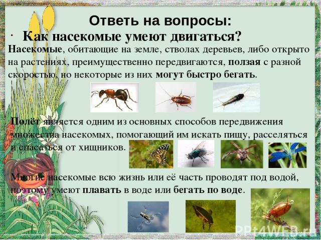 яйца личинки куколки муха Стадии развития насекомых ( на примере развития комнатной мухи) выход Стадии развития комара