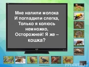 Источники Фон Экран Собачки Загадки Собака Попугай Мышь Ёж Корова Петух Свинья К