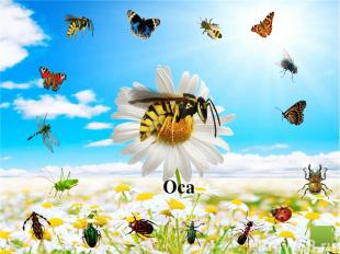 Кузнечик Муравей Пчела Стрекоза Божья коровка Жук Муравей Муха Жук бронзовка Фон