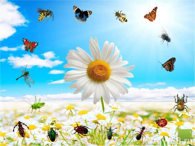 Дорогие ребята! Щёлкнув по маленькой картинке, вы сможете рассмотреть насекомое и узнать его название. Приятного просмотра!