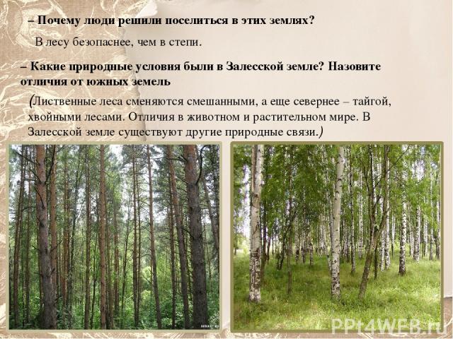 – Почему люди решили поселиться в этих землях? В лесу безопаснее, чем в степи. – Какие природные условия были в Залесской земле? Назовите отличия от южных земель (Лиственные леса сменяются смешанными, а еще севернее – тайгой, хвойными лесами. Отличи…