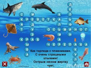 Источники Фон i Х Стрелка Дельфин Черепаха Акула Осьминог Рыба Скат Кальмар Краб