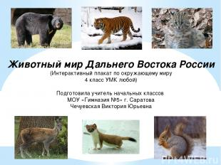 Гималайский медведь Амурский тигр Дальневосточный кот Кабарга Горностай Белка