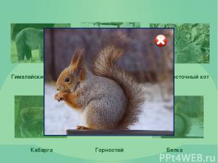 Использованные ресурсы: Медведь: http://vladivostok.bezformata.ru/content/image7