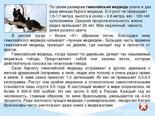 Источники информации: http://animalreader.ru/cabarga.html (кабарга) http://web-zoopark.ru/mlekopitayushchie/gornostay.html (горностай) http://web-zoopark.ru/mlekopitayushchie/gimalayskiy_medved.html (гималайский медведь) http://primorie.do.am/blog/d…