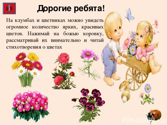 На клумбах и цветниках можно увидеть огромное количество ярких, красивых цветов. Нажимай на божью коровку, рассматривай их внимательно и читай стихотворения о цветах Дорогие ребята!