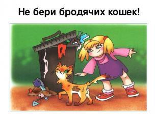 Не бери бродячих кошек!