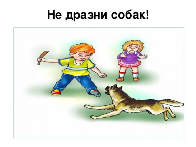 Не дразни собак!