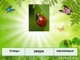 Назовите признаки каждой группы. птицы звери насекомые