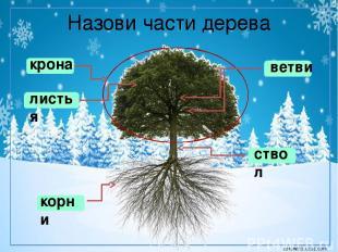 Назови части дерева крона корни ствол листья ветви corowina.ucoz.com