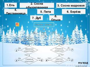 Липа летом зимой corowina.ucoz.com