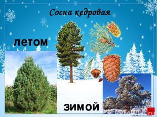 Ольха летом зимой corowina.ucoz.com