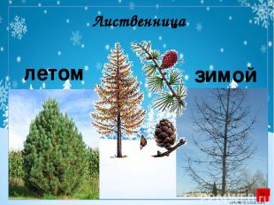 Использованы ресурсы: http://nnm.ru/blogs/_tigerrr_/zimnie_vektornye_fony_/ http