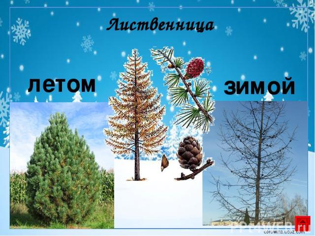Использованы ресурсы: http://nnm.ru/blogs/_tigerrr_/zimnie_vektornye_fony_/ http://900igr.net/fotografii/pedagogika/Nachalnaja-shkola-Garmonija/023-Obuchenie-gramote.html Автор шаблона Коровина И.Н. http://forest.geoman.ru/forest/item/f00/s01/e00015…
