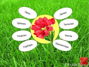 Пион Георгин Цинния Гербера Лилия Тюльпан Калла Хризантема
