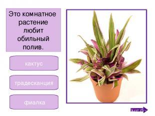 кактус кала алоэ Второе название этого растения столетник. Никифорова Н.В.