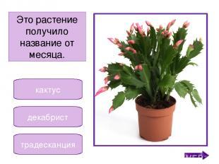 МОЛОДЦЫ! Никифорова Н.В.