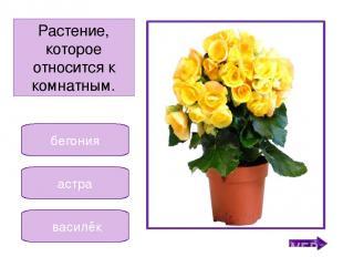 фиалка кала кактус Растение, которое похоже на зелёного ёжика. Никифорова Н.В.