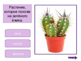 гиппеаструм кала сансевьера Растение, которое в народе называют «щучий хвост». Н