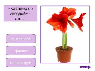 фиалка бегония кала Название этого растения означает «прекрасная». Никифорова Н.