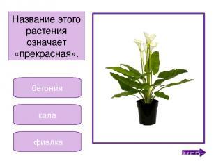 гиппеаструм кала фиалка Невысокое растение, у которого цветочки разных цветов. Н