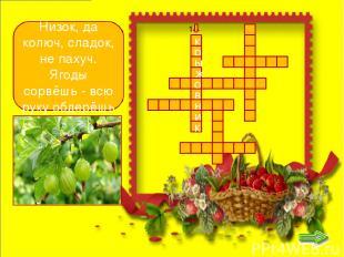 к р ы ж о в н и р с м к о д и н а Чёрных ягод пышный куст - Хороши они на вкус!