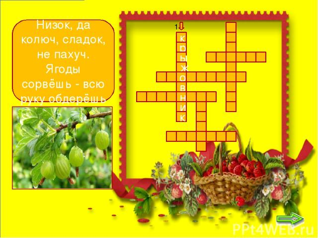 к р ы ж о в н и р с м к о д и н а Чёрных ягод пышный куст - Хороши они на вкус! 2