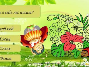 Кто на себе лес носит? Верблюд Ёжик Олень Свинья http://panowavalentina.ucoz.net