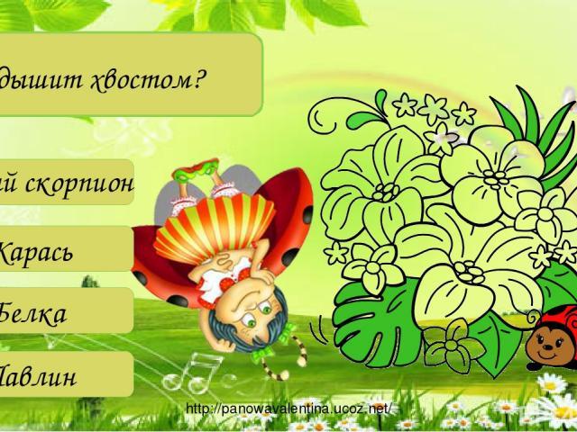 Кто дышит хвостом? Водный скорпион Карась Белка Павлин http://panowavalentina.ucoz.net/