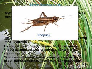 Насекомые Муху, комара, бабочку, кузнечика, саранчу, сверчка и многих других жив