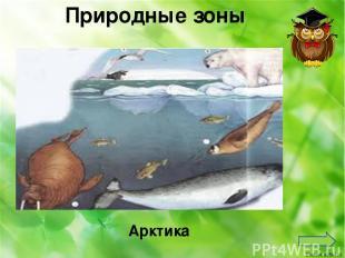 Органы чувств человека Нос Какой орган чувств отвечает за обоняние? Ekaterina050