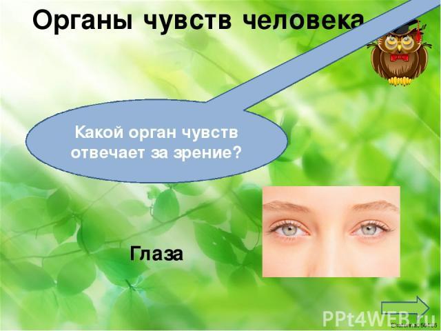 Органы чувств человека Язык Какой орган чувств отвечает за вкус? Ekaterina050466