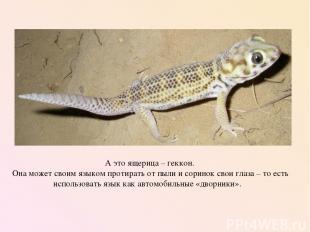 А это ящерица – геккон. Она может своим языком протирать от пыли и соринок свои